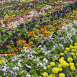 Stock Photo: Enchanting Bed of Flowers