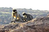 Monkey Activities — Stock Photo