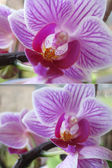 Set. Spring flowers - orchid — Stock Photo