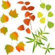 Leaf, collection for designers — Stock Vector #13368630