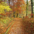 Autumn in forest, color photo - Foto Stock