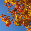 Autumn - plant background - color photo - Foto Stock