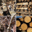 Set of wood textures - Foto Stock