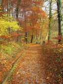 Autumn in forest, color photo — Stock Photo
