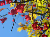Autumn, abstract natural backgrounds for your design — Stock Photo
