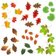 Autumn leaf, collection for designers — Stock Vector #13613562