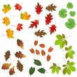 Stock Vector: Autumn leaf, collection for designers
