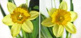 Satz. Frühlingsblumen auf weißem Hintergrund. — Stockfoto