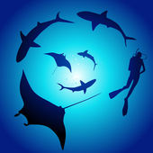 Shark and diver, swimming with sharks — Stock Vector