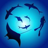 акула и дайвер, плавание с акулами — Cтоковый вектор