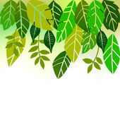 Leaves, collection for designers — Stock Vector