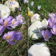 Many blossoming snowdrops and crocuses. Early spring — Stock Photo