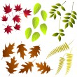 Leaf, collection for designers — Stock Vector #31063565