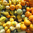Pumpkins collection on the autumn market — Stock Photo