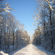 Snowy winter forest and knurled wide trails. Christmas morning. — Stock Photo