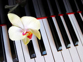 Piano keys with a flower, musical background. — Stock Photo