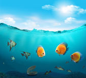Fishes in the sea. — Stock Photo