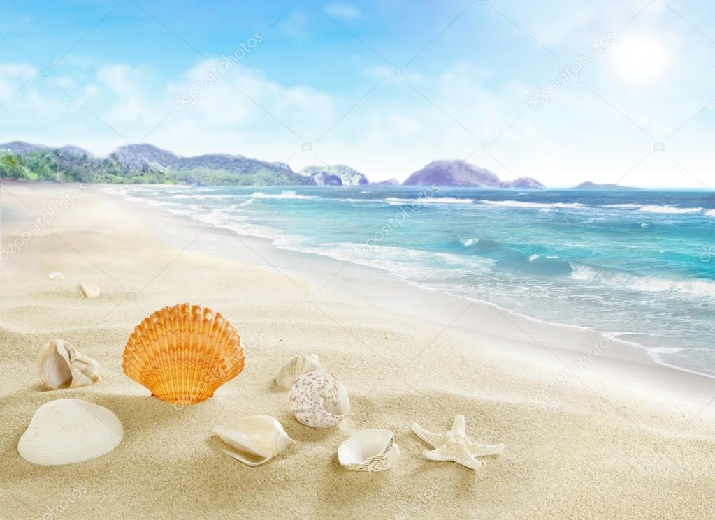 Paesaggio con conchiglie sulla spiaggia di sabbia foto for Disegni di casa sulla spiaggia tropicale
