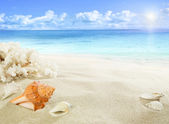 Shells and coral on the beach — Stock Photo