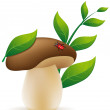 Mushroom cep illustration — Stock Photo