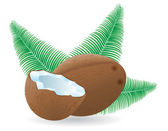 Coconut and leaf vector illustration — Stock Vector