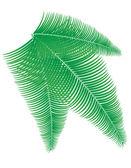 Palm branch vector illustration — Vettoriale Stock