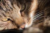 Cat Named Lucky — Stock Photo