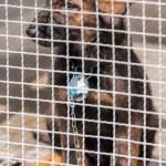 Puppy in captivity — Stock Photo