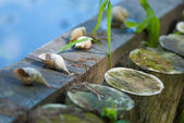 Shells on wooden logs — Stock Photo