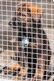 Puppy in captivity — Zdjęcie stockowe