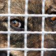 Dog in captivity — Stock Photo #42784267