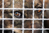 Dog in captivity — Stock Photo