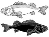 Fish graphic black and white — Stock Vector