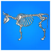 The skeleton of a cow — Stock Vector