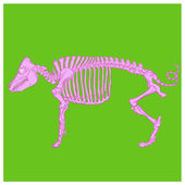The skeleton of a pig — Stock Vector