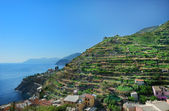 Vine hill in Manarola, Italy — Stock Photo