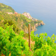 Scenery of Manarola village on a vine hill — Stock Photo