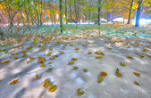 Bright winter-autumn landscape background — Stock Photo