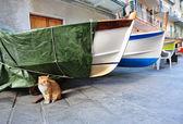 Gato rojo y barcos de pesca en una aldea italiana manarola — Foto de Stock