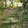 Forest pathway with stairs — Stock Photo #30940959