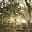 Forest pathway with stairs — Stock Photo #30941109