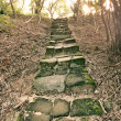 Forest pathway with stairs — Stock Photo