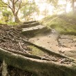 Forest pathway with stairs — Stock Photo #30943321