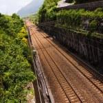 Long railroad — Stock Photo #31168027