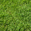 Green grass background — Stock Photo #31168589