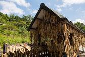 Bambus si přejí poláci — Stock fotografie