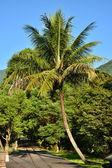 Palm tree on street — Stock Photo