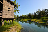 тайдун – форест парк — Стоковое фото
