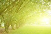 Sunlight in park — Stock Photo