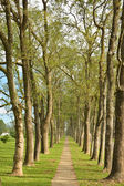 Park in spring time — Stock Photo
